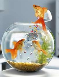 pH of the water must be properly balanced for fish to thrive.